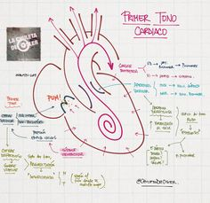 La Chuleta de Osler: Cardiología: Tonos cardíacos