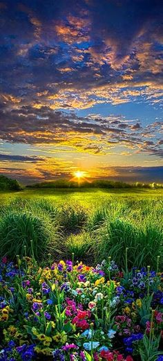 Beautiful Wisconsin meadow at sunset