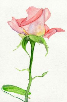 "havekat: "" Twisted Watercolor and Gouache On Cotton Paper ""High Society"" Hybrid Tea Rose Rosebud "" Watercolor Rose, Abstract Watercolor, Watercolor Paintings, Watercolors, Flower Drawing Tutorials, Rose Sketch, Hybrid Tea Roses, Rose Buds, Gouache"