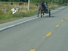 Amish Buggy outside of Jamestown, NY