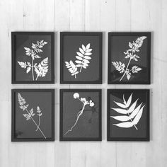 Original Botanical Prints. Set of 6 Framed. Hand pressed botanical prints made from actual plants. One of a kind and timeless botanicals