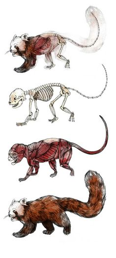 Illustrations promoting Body World's traveling exhibit, Animal Inside Out.