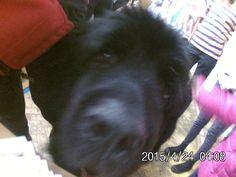 Nietypowy gość podczas 24. Finału WOŚP w ZSO2 Legionowo. Oto pies ratowniczy Maykel!