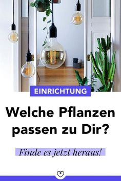 Plants breathe new life into your home and create a pleasant atmosphere. In our new article we introduce you to plants for every style of furnishing. New Life, How To Introduce Yourself, Breathe, Ceiling Lights, Interior, Plants, Home Decor, Yellow Lamps, Bright Colored Furniture