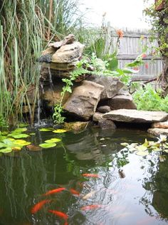Pond and Water Garden: Pond and Waterfall