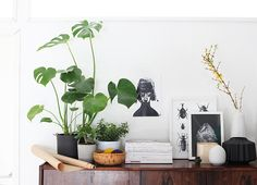 Indoor plants and simple pots.