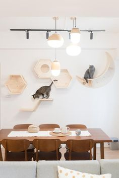 We all heard a good design makes a difference, but how? We like to start with something simple,something can be seen daily From there, we give the furniture a bit of our own touch and share that with our furry friend. Diy Furniture Renovation, Diy Furniture Cheap, Diy Furniture Hacks, Cat Wall Shelves, Wall Mounted Shelves, Cat Wall Furniture, Furniture Legs, Garden Furniture, Furniture Design