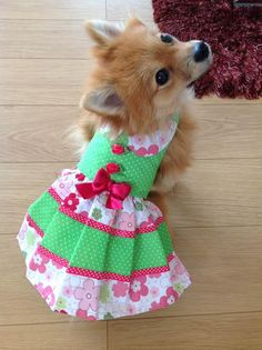 Trixie modeling a creation made from Sofi & Friends Pattern 1712 Abbi Lyn Dog Dress