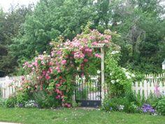 Rose arbor...so lovely!