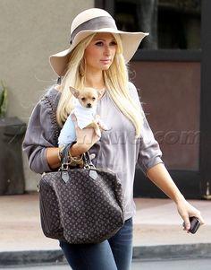 Paris Hilton denim shopping blonde chihuahua dog puppy sunglasses