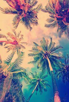 Image via We Heart It #background #colorful #palms #phone #vintage #wallpaper