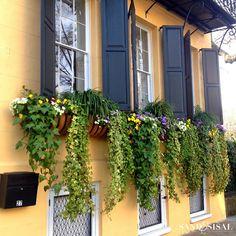 best summer flowers on balcony – Vyhľadávanie Google Middleton Place, Window Boxes, Summer Flowers, Sisal, Charleston, Balcony, Plants, Gardening, Google