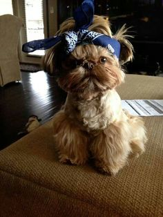 This one looks like my g-daughter, Brianna! She wears a scarf in her hair exactly like this!!LOL!!