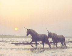 Horned horses