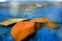Leaves on blue Mantle Art, Blue Leaves, View Image