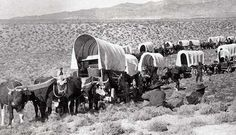 Pioneers heading west on the Oregon trail in the early 1800s.