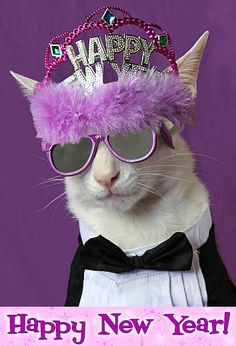Best dogs happy new year pets Ideas Crazy Cat Lady, Crazy Cats, Funny Cats, Funny Animals, Cute Animals, Cool Cats, Happy New Year Funny, Amor Animal, Fete Halloween