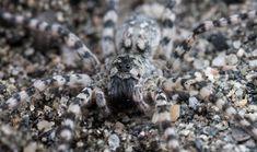 I dag har edderkoppene navnedag! Spider, Spiders