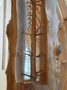 "Italian artist Giuseppe Penone currently has an installation in Toronto's Art Gallery of Ontario, in which Penone has carefully removed rings of growth from a fir tree to reveal its former young shape hidden beneath decades of growth. ""Penone arrives at these forms by carving the tree trunk leaving the knots in place until they emerge as limbs, revealing the sapling within."""