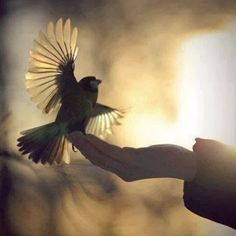 Can kuşu - Gökhan Özcan