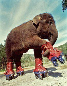 an elephant on skates...your argument is invalid....would make a great blocker tho