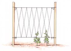 Staking Vegetables Using a Trellis System - Your trellis system will need some kind of support: posts or Studded T Posts driven into the ground are typical solutions. Lace heavy twine or wire and pattern string from top to bottom to support the cr Bean Trellis, Tomato Trellis, Diy Trellis, Garden Trellis, Trellis Ideas, Tomato Cages, Pole Beans Trellis, Trellis Design, Veg Garden