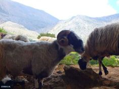 wandern kreta - limnes Heraklion, Crete Greece, Walk On, Hiking, Island, Animals, Walks, Animales, Animaux
