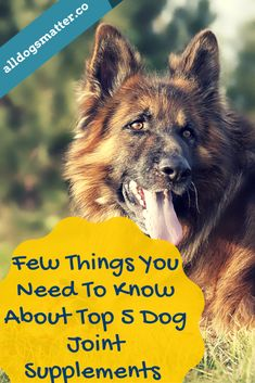 10 Secrets You Will Not Want To Know About Dog Joint Supplements