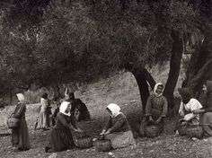 More old photos from Greece of photos by Fred Boissonnas that shows a quiet and different world. Magnified Images, Greek Girl, Greece Photography, Crete Island, Greek History, Crete Greece, Old Maps, Great Photographers, Olive Tree