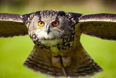 My favorite animal is definitely the owl.