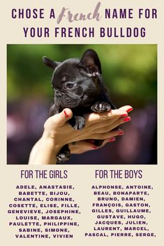 When you are anxiously waiting for your French Bulldog to join you, you may be thinking about French Bulldog names. French Bulldog Names, French Names, French Bulldog Puppies, French Bulldogs, Cute Names, Love French, Puppy Names, Kittens And Puppies, Oui Oui