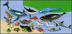 Classic Ocean Animal Collection at Lakeshore Learning Shark Facts For Kids, Kindergarten Themes, Lakeshore Learning, Social Activities, Sea Theme, Humpback Whale, Safari Animals, Otters, Sea Creatures