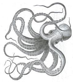 realistic kraken drawing | ... Drawings , Octopus Drawings Tumblr , Realistic Octopus Drawings
