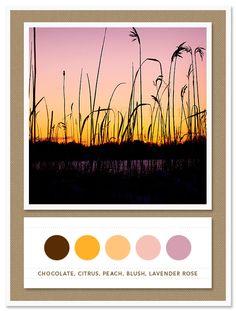 Color Card 038: Chocolate, Citrus, Peach, Blush, Lavender Rose