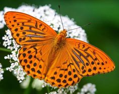 Beautiful Pictures of Flowers and Butterflies by Adam Gor Beautiful Flowers Pictures, Flower Pictures, Beautiful Butterflies, Flying Flowers, Butterflies Flying, Micro Photography, Nature Photography, Kinds Of Camera, Butterfly Species