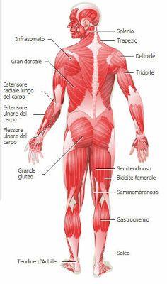 Dare Un Nome Ai Propri Muscoli Con La Nostra Mappa Muscolare Scopri