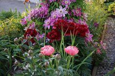 Eure Gartenbilder, Beete und Gestaltungsideen - Sommer 2015 - Seite 3 - Gartengestaltung - Mein schöner Garten online