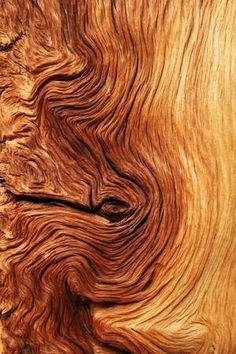 Wood Patterns, Patterns In Nature, Textures Patterns, Henna Patterns, Natural Forms, Natural Texture, Tree Roots, Trendy Tree, Wood Slab