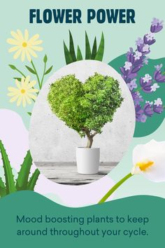 Keeping flowery friends around can help boost your entire wellbeing throughout your menstrual cycle: Yoppie talks about the power of mood boosting plants. Menstrual Cycle, Flower Power, Mood, Friends, Flowers, Plants, Amigos, Plant, Royal Icing Flowers