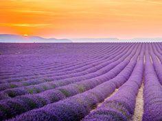 Camp cu lavanda in Provence
