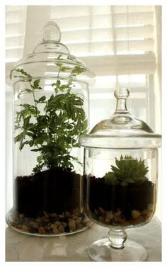 Terrarium -- pretty & easy way to have plants inside