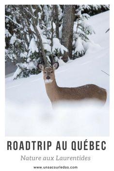 Roadtrip hivernal au Québec aux Laurentides. Neige blanche, rencontres à 4 pattes, nature et buches dans la cheminée… #Canada #quebec #laurentides #nature #hiver #roadtrip #animaux #chalet #biche #neige