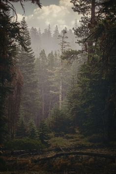 Morning mist in the forest...