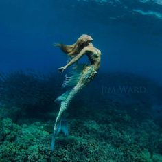 A Real-Life Mermaid Who Swims With Sharks Using Her Fish Tail And Holds Breath For 2 Minutes | Bored Panda