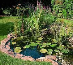 86 Best Ponds Images In 2019 Water Garden Backyard