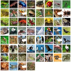 Free animal classification unit... the nice part is all these labeled, colored pictures of animals.  Could print, laminate, and use for something science-related.