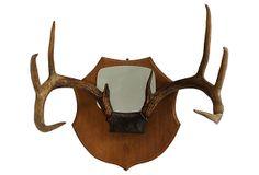 Mounted 8-Point Antlers w/ Mirror on OneKingsLane.com