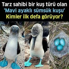Ahmet...sübhanALLAH Grey Suit Men, Paper Owls, Outdoor Yoga, School Signs, Yoga Challenge, Animal Kingdom, Biology, Animals And Pets, Pictures