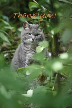 feral cat spay neuter project Help fix stray and feral cats in michigan with our trap, neuter, return  who is there for the feral cats a feral cat is an  free spay/neuter for your feral.