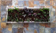 Cuadro Vivo, Plantas Naturales, Muro Interior